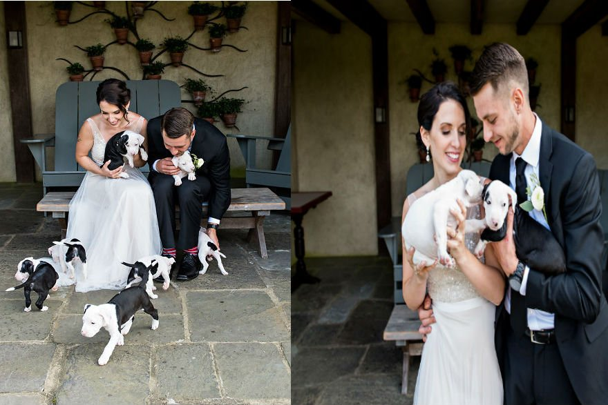 socialthe mochaks 226 5a8852697c0db  880 1.jpg?resize=300,169 - This Couple Fostered A Litter Of Adorable Puppies And Had To Put Them In Their Wedding