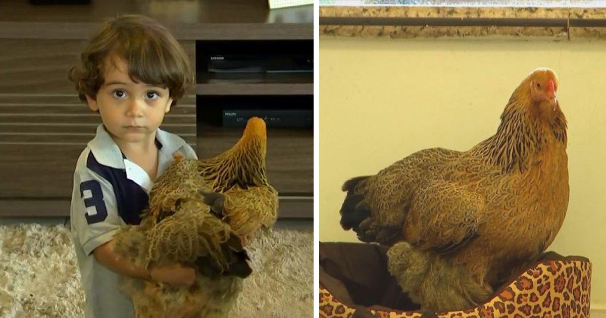 thumbnail5f.png?resize=1200,630 - Garotinho tem uma galinha de estimação e até toma banho com ela