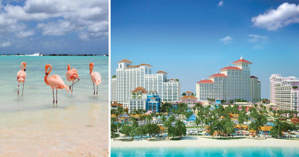 thumbnail5gy.png?resize=1200,630 - Que tal ganhar dinheiro cuidando de flamingos nas Bahamas? Resort local está contratando!