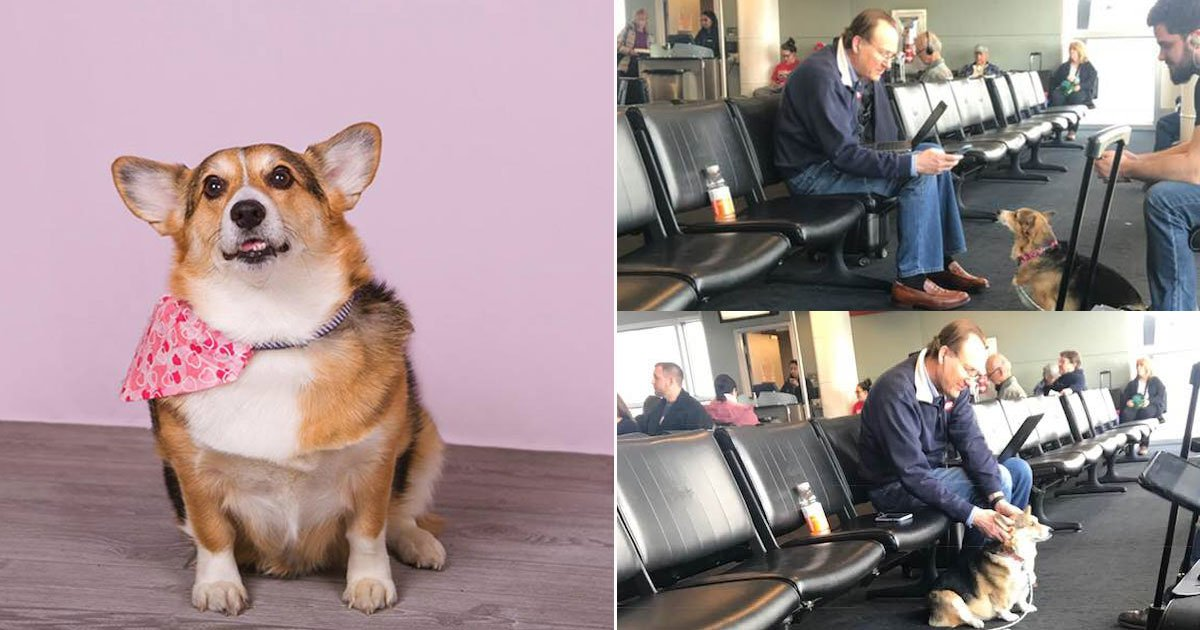 untitled 1 33 - A Loving Dog―Corgi Who Consoled A Stranger Who Lost His Dog Is Going Viral On The Internet