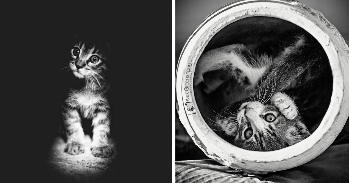 untitled 1 9 - 30+ Images Which Prove That Cats Are The Most Mysterious Creatures On Earth