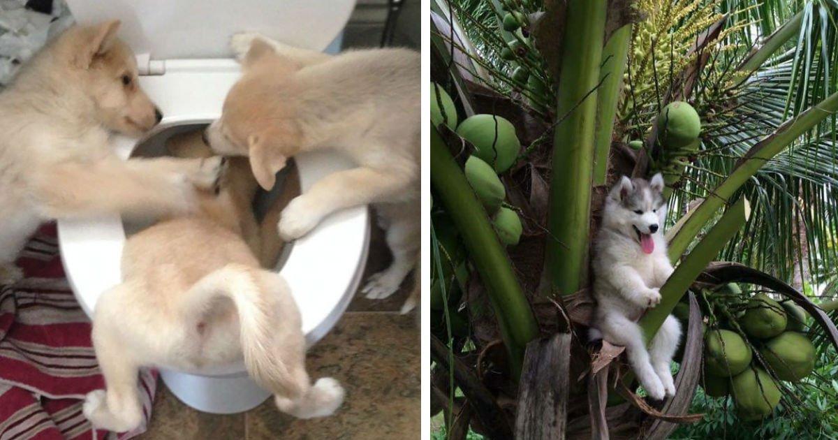 untitled 1.jpg?resize=1200,630 - Essas imagens divertidas de cães em situações inusitadas farão seu dia!