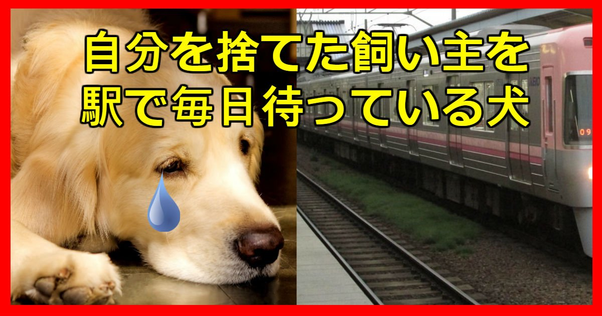 waiting dog.jpg?resize=300,169 - 自分を捨てた飼い主が戻ると思い、毎日電車を見てシッポを振る犬