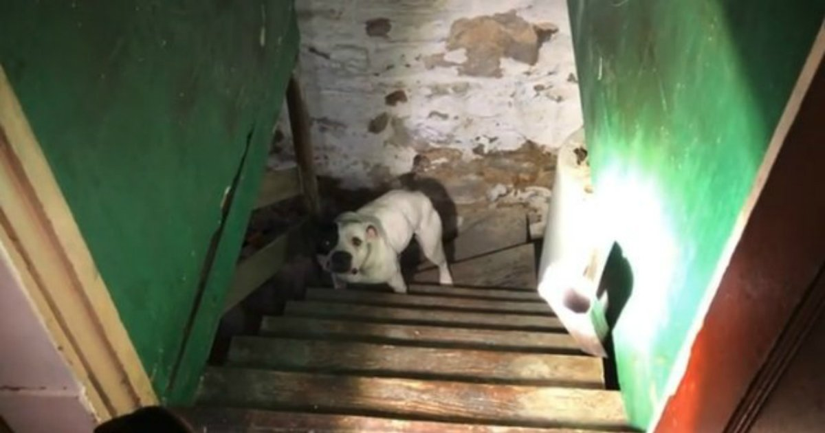 1 459.jpg?resize=412,232 - Man Moves Into New House And Finds Dog Stranded In The Basement