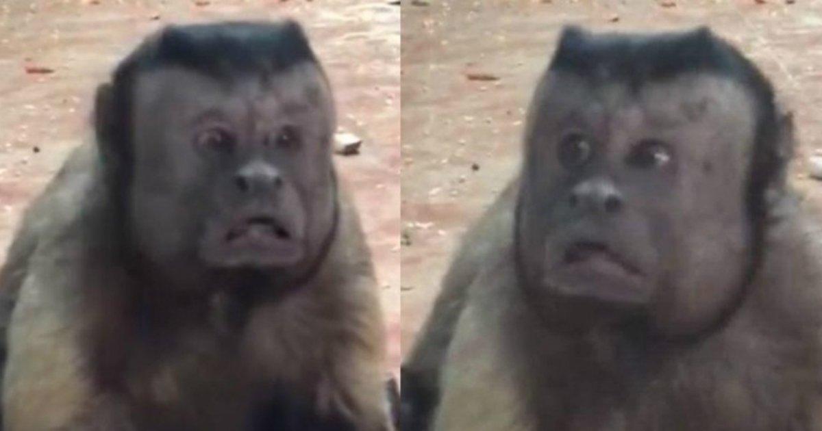 1 492.jpg?resize=1200,630 - Este macaco tem o rosto igual ao de um ser humano!