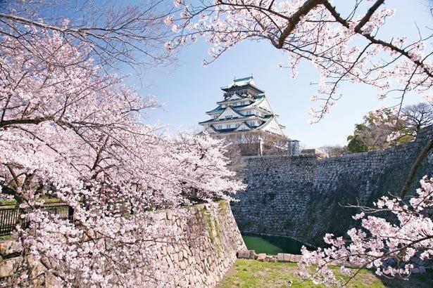 大阪城天守閣 桜のシーズン에 대한 이미지 검색결과