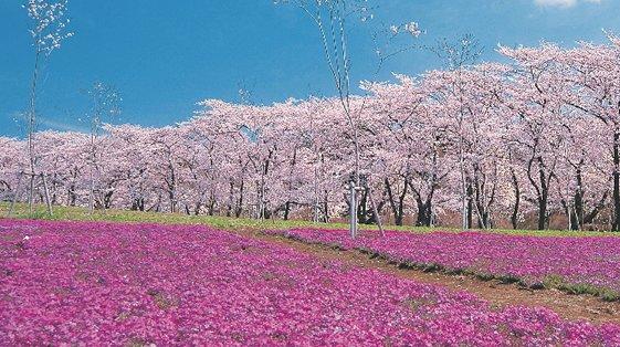 赤城南面千本桜まつり에 대한 이미지 검색결과