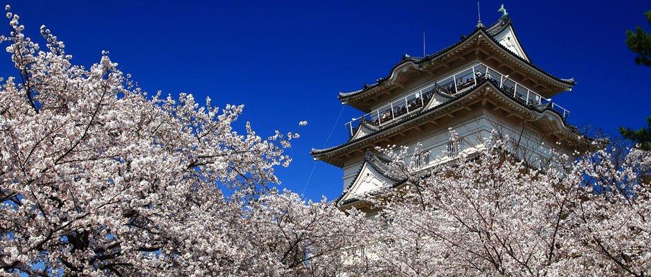 小田原桜まつり에 대한 이미지 검색결과