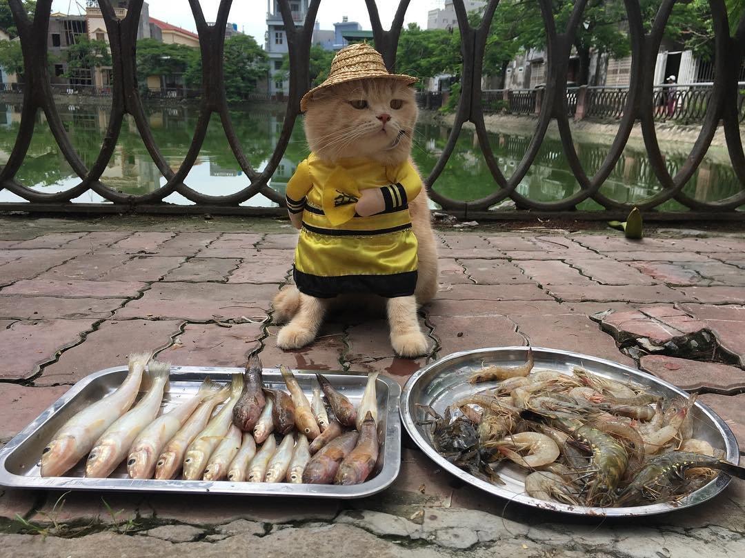180306 202.jpg?resize=1200,630 - 貓皇帝微服出巡,在越南市場幫貓奴賣魚不屑眼神超可愛