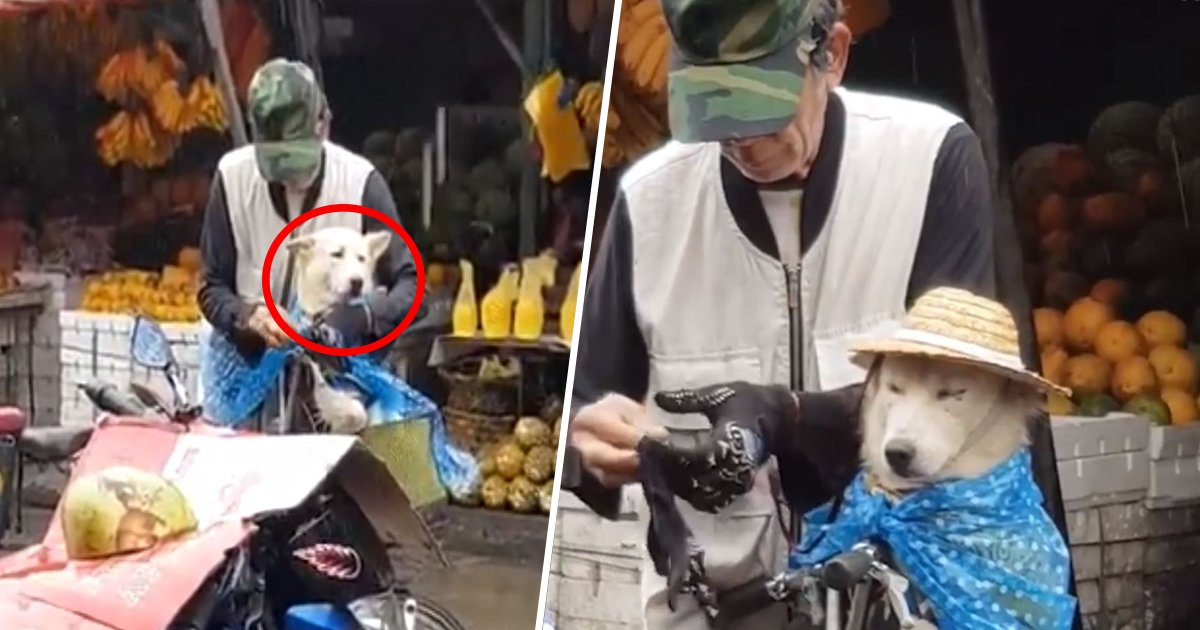1ec8db8eb84ac 12.jpg?resize=1200,630 - This Video Of Grandpa Keeping The Dog Dry But Not Having The Rain Protection For Himself Will Restore Your Faith In Humanity (Video)