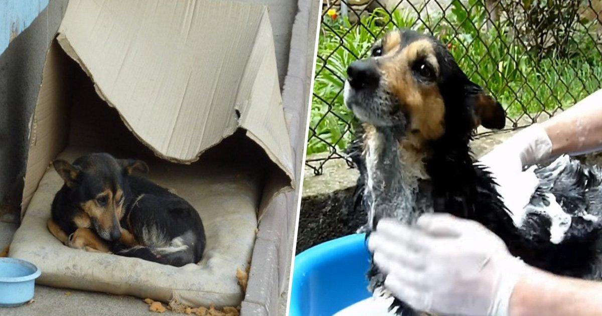1ec8db8eb84ac 35 - Cachorro de rua que vivia em uma caixa de papelão sofre transformação surpreendente após ser resgatado
