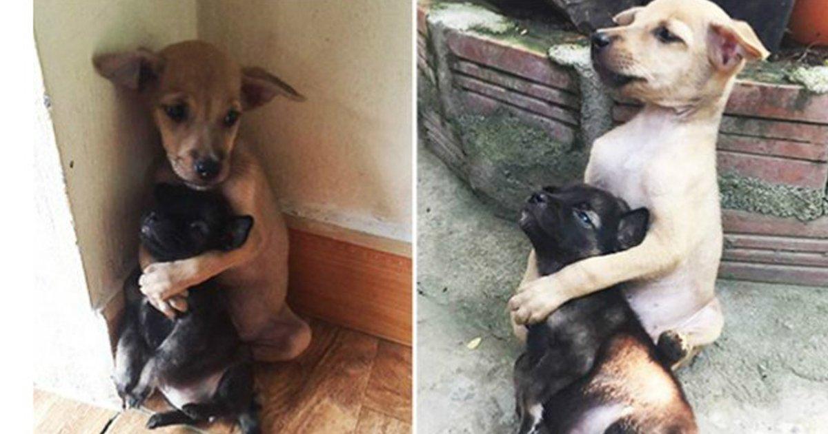 """2 351.jpg?resize=300,169 - """"떨어지면 안돼!"""" 포옹을 멈추지 않는 강아지 두 마리의 가슴 아픈 사연(사진 4장)"""