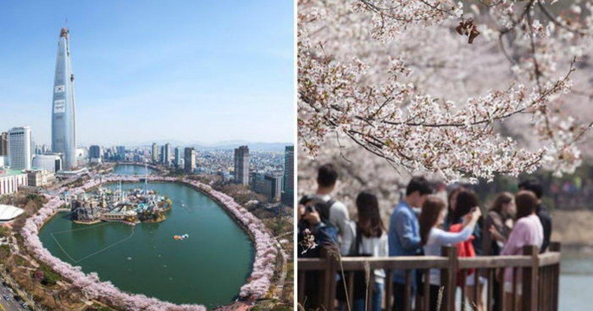 2 366.jpg?resize=412,232 - 앞으로 일주일 뒤면 볼 수 있는 '핑크빛 벚꽃' 만개한 석촌 호수 풍경 (사진)