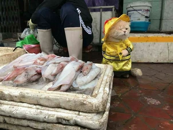 2 5a9e567acd178  605 - This Adorable Fish Vendor Keeper In Vietnam Will Definitely Melt Your Heart