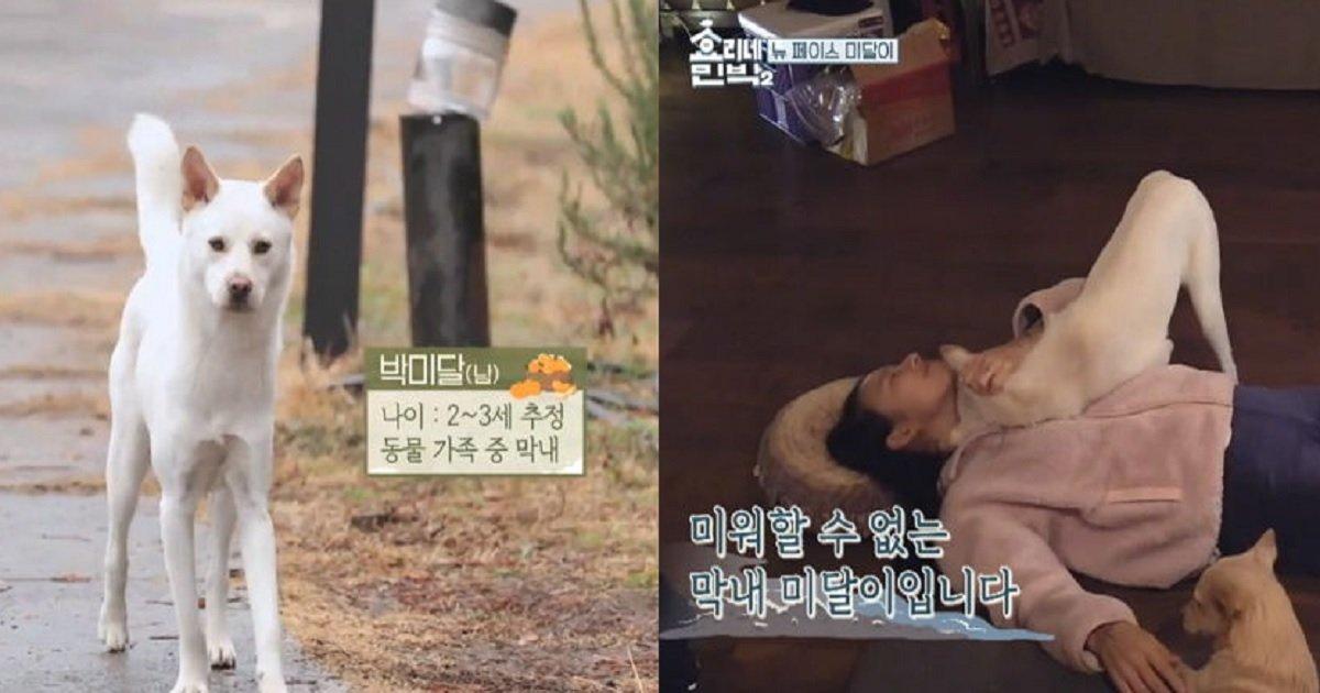 2222 - 강형욱의 도움으로 잃어버린 '미달이' 찾은 이효리의 사연 (영상)