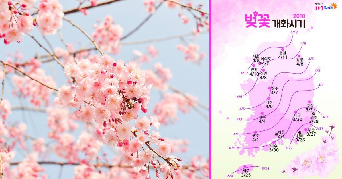 """32141 - """"우리 벚꽃 보러 가자~"""" 올해 벚꽃의 '첫 시작과 절정' 예상 시기"""