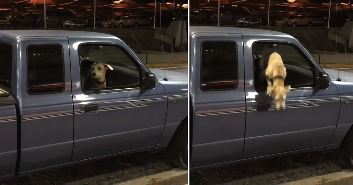 3jrls - Dog Gets Emotional And Jumps Out Of Truck Window