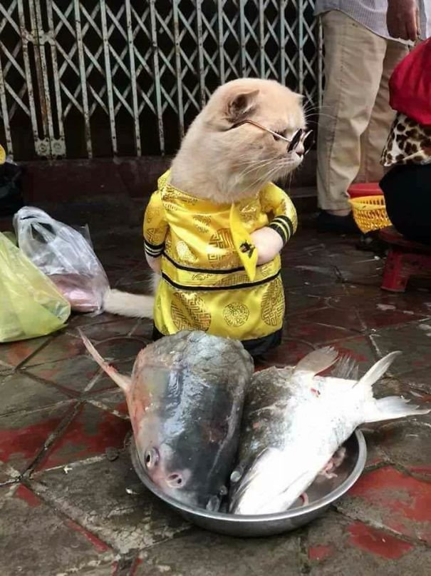 4 5a9e5685a4f02  605 - This Adorable Fish Vendor Keeper In Vietnam Will Definitely Melt Your Heart