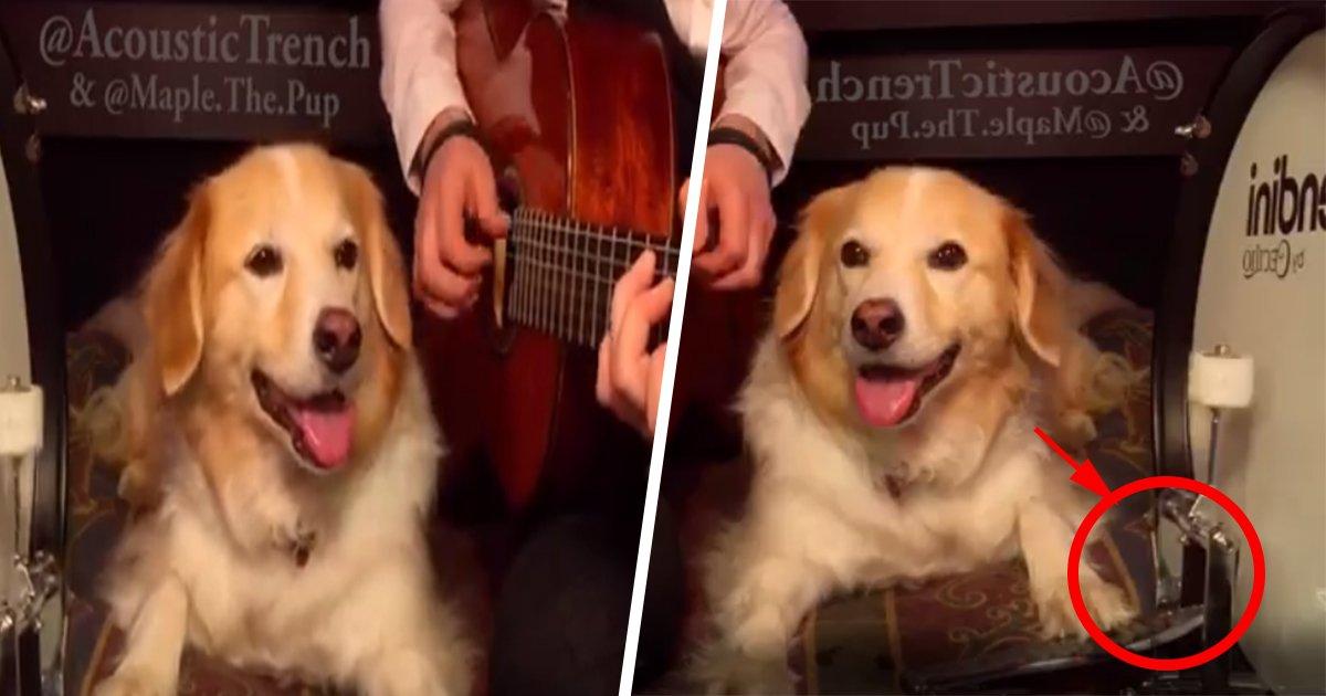 4ec8db8eb84ac.jpg?resize=1200,630 - Cachorro toca tambor e encanta por ter um ritmo perfeito (vídeo)