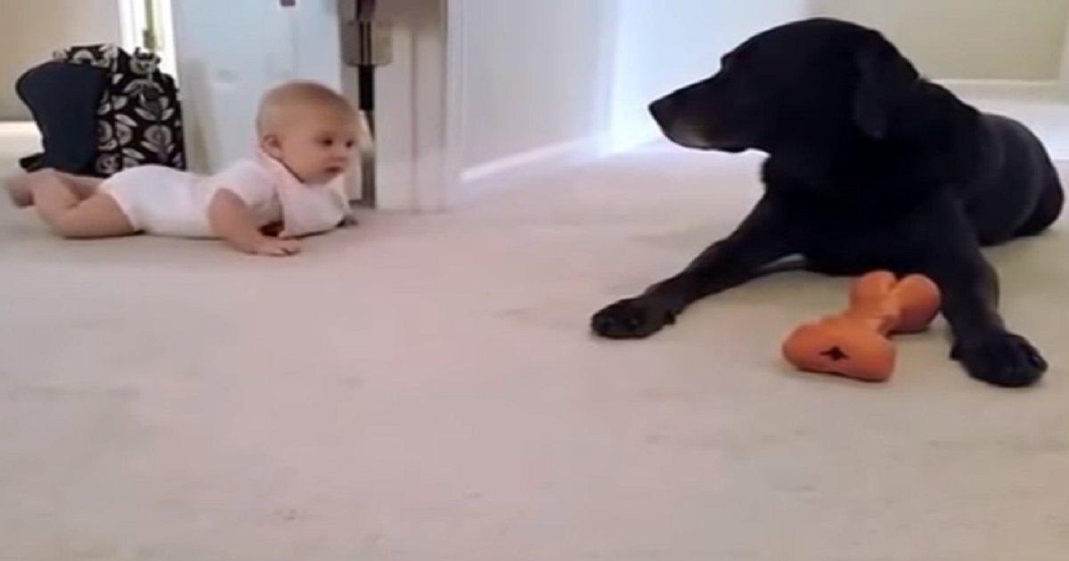 5j3 - [Vidéo] Bébé rampe pour la première fois et obtient une belle récompense de son chien