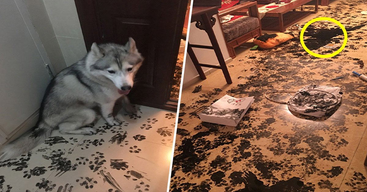 8ec8db8eb84ac.jpg?resize=300,169 - Essas imagens hilárias vão provar por que os huskies são os cachorros mais estranhos de todos os tempos
