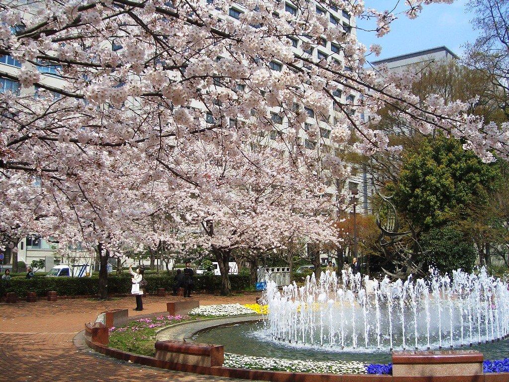 日比谷公園 お花見에 대한 이미지 검색결과
