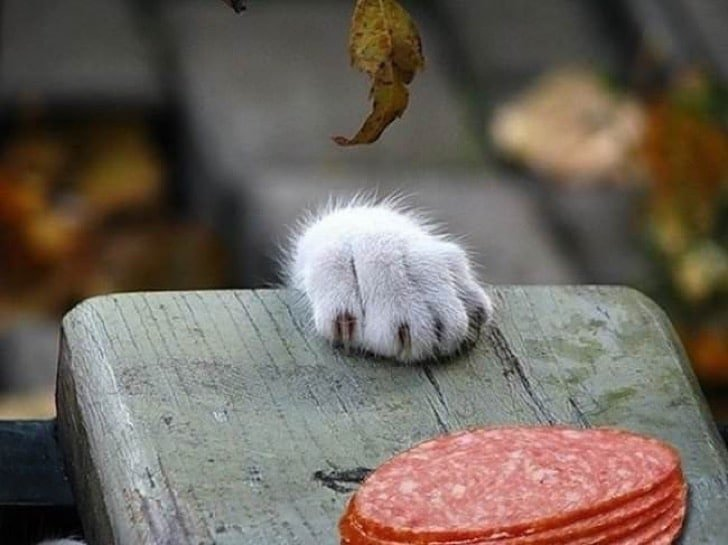 014 1 - Confira 10 fotos que mostram que os gatos não têm respeito por nada!
