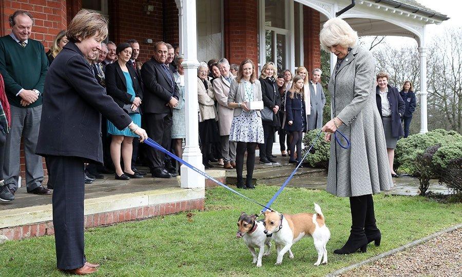 150664418959cd90dda87cb - Sorprendentes datos que no conocías sobre Camilla, la elegante esposa del Príncipe Carlos