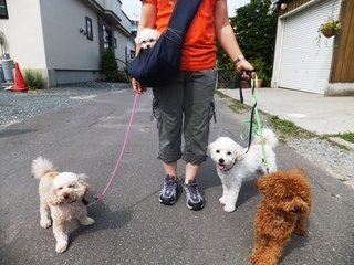 Image result for 泣く子犬