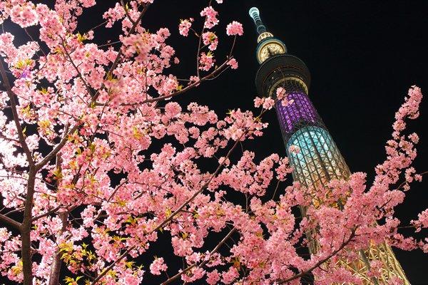 東京スカイツリー お花見에 대한 이미지 검색결과