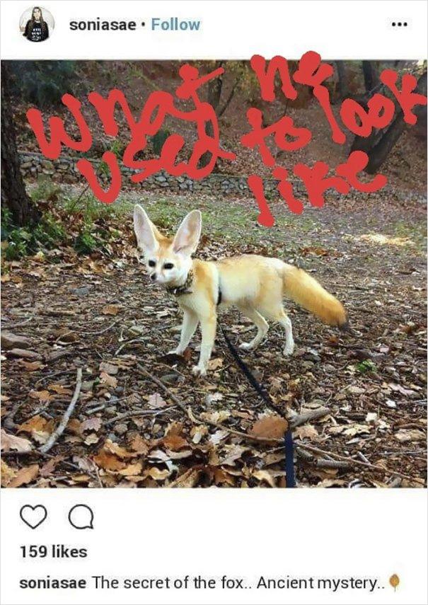 fennec fox vegan diet animal abuse jumanji sonia sae 16 5aa0fbe57c040  605 - Vegan YouTuber Puts Her Pet Fox On A Vegan Diet And Ignites An Internet Firestorm