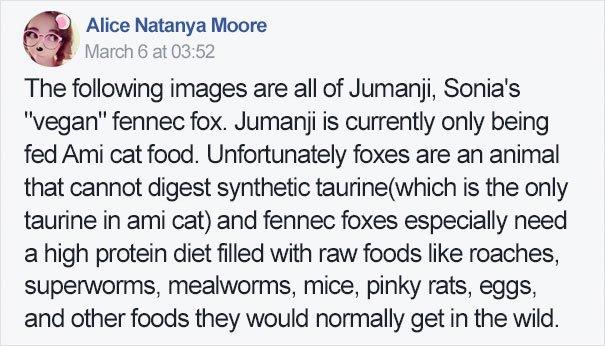 fennec fox vegan diet animal abuse jumanji sonia sae 40 - Vegan YouTuber Puts Her Pet Fox On A Vegan Diet And Ignites An Internet Firestorm