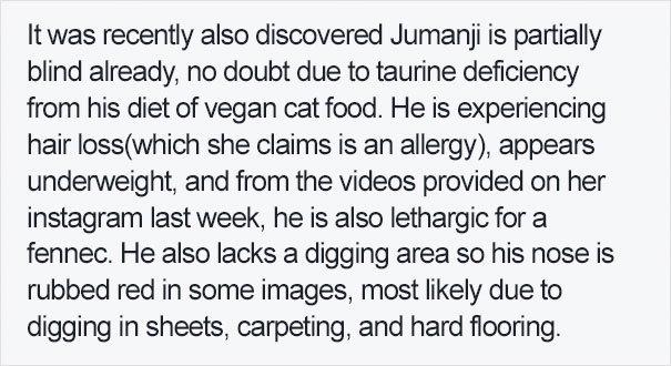 fennec fox vegan diet animal abuse jumanji sonia sae 42 - Vegan YouTuber Puts Her Pet Fox On A Vegan Diet And Ignites An Internet Firestorm
