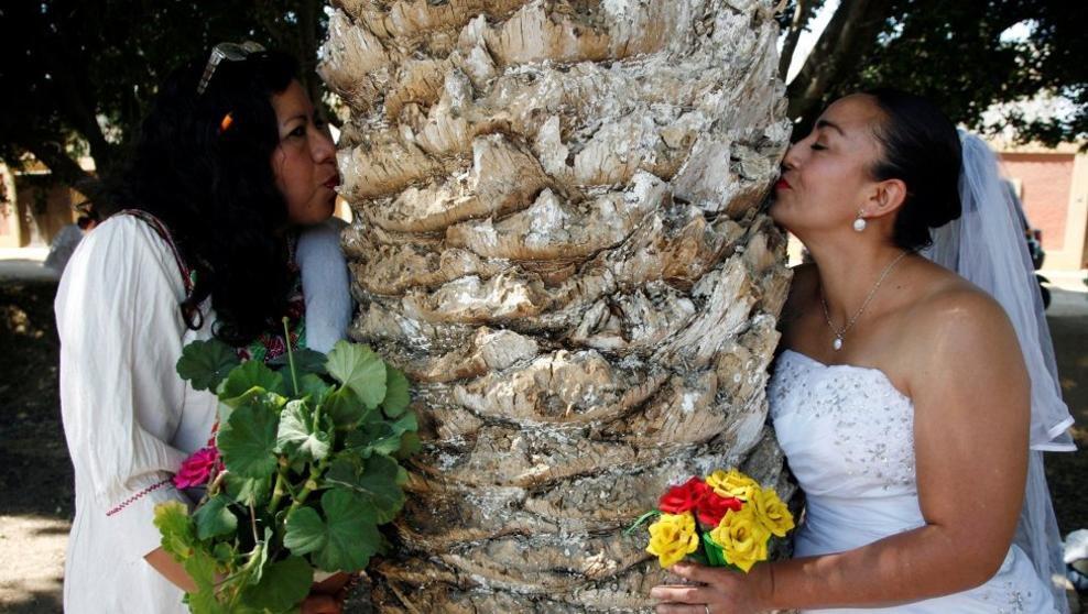 Casarse con un árbol... amor para toda la vida