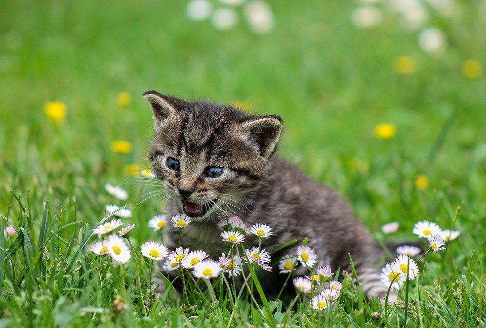 kitty 2948404 960 720 - 일주일에 한 번 '연어' 먹으면 '생리통' 완화시킬 수 있는 이유
