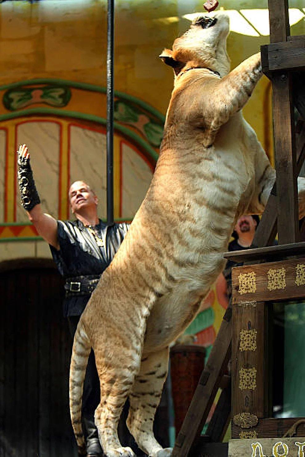 s 754KLj4AapVKlOh58469mD12JgF - 27 casos de animales que crecieron hasta lograr tamaños monstruosos