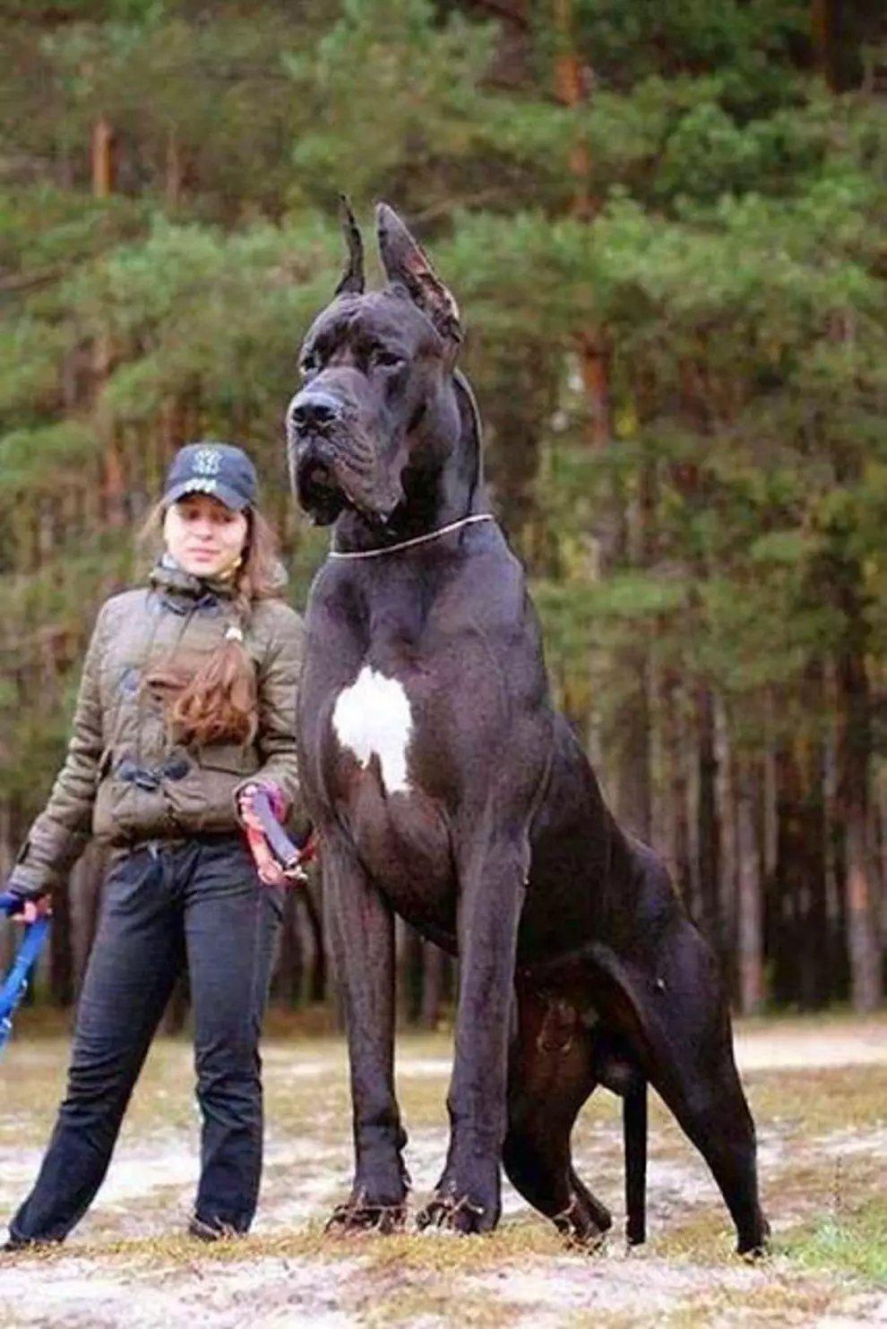 s dtmdDCyg7VyHX0jL0w4nXSuDy78 - 27 casos de animales que crecieron hasta lograr tamaños monstruosos