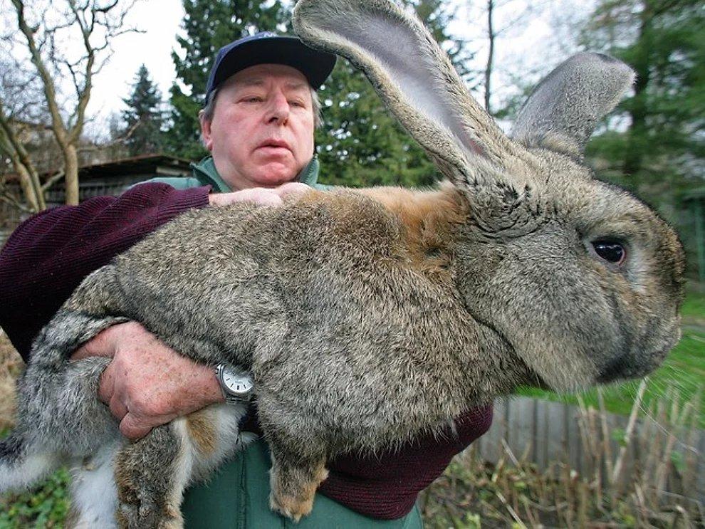 s eXM4MEtZsApLi7FLBrulyFFBFzb - 27 casos de animales que crecieron hasta lograr tamaños monstruosos