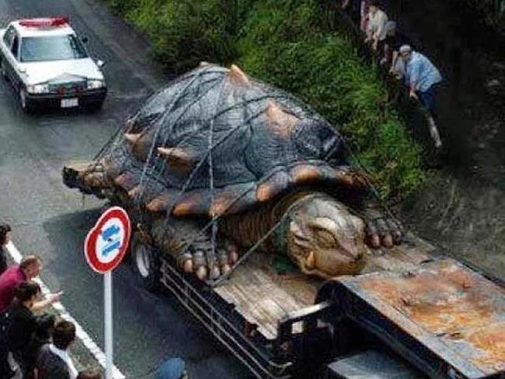 s fQocj4CfC8FoDVC9NE0A3GQBEzL - 27 casos de animales que crecieron hasta lograr tamaños monstruosos