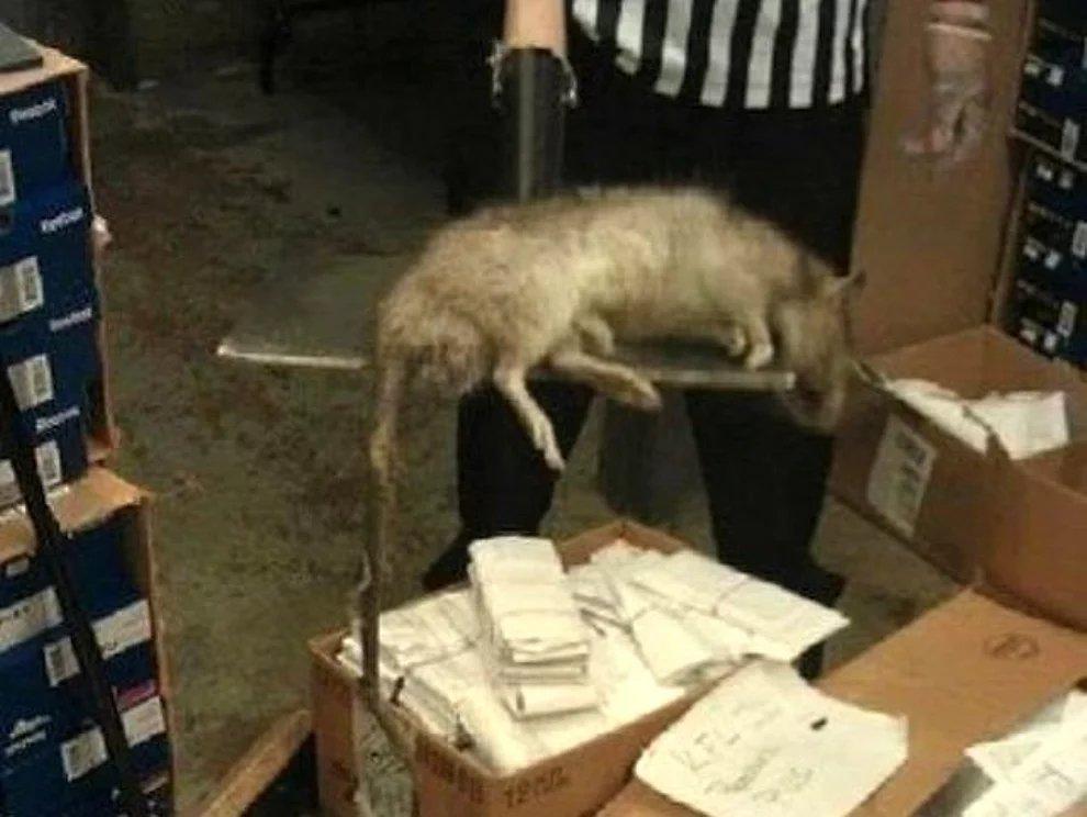 s fe6tORXfhhVe54LMHyVrry1rNnz - 27 casos de animales que crecieron hasta lograr tamaños monstruosos