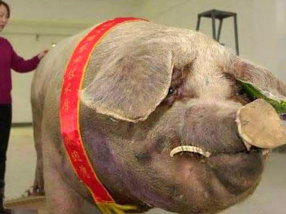 s nEyOOXU9wCcyvPCSwBBBvn5mlWj - 27 casos de animales que crecieron hasta lograr tamaños monstruosos