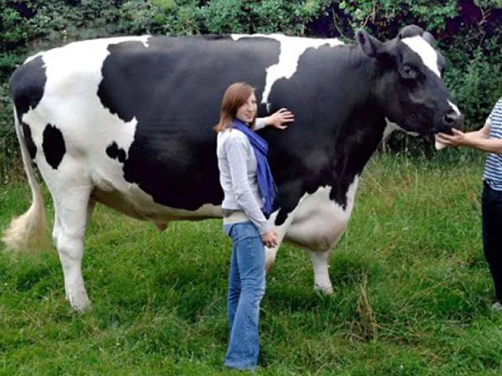 s oovCPejQScRuFcNxHbtQjgsT9Av - 27 casos de animales que crecieron hasta lograr tamaños monstruosos
