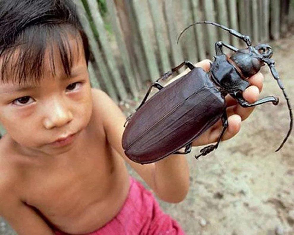 s xHzg4fIOxJpUC1Apm8Q6gqWbVAm - 27 casos de animales que crecieron hasta lograr tamaños monstruosos