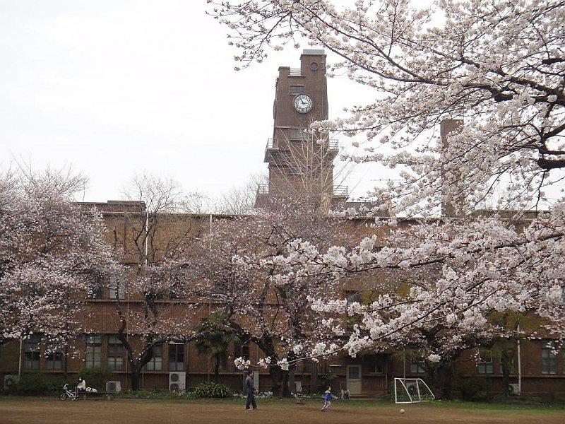 東京大学 お花見에 대한 이미지 검색결과
