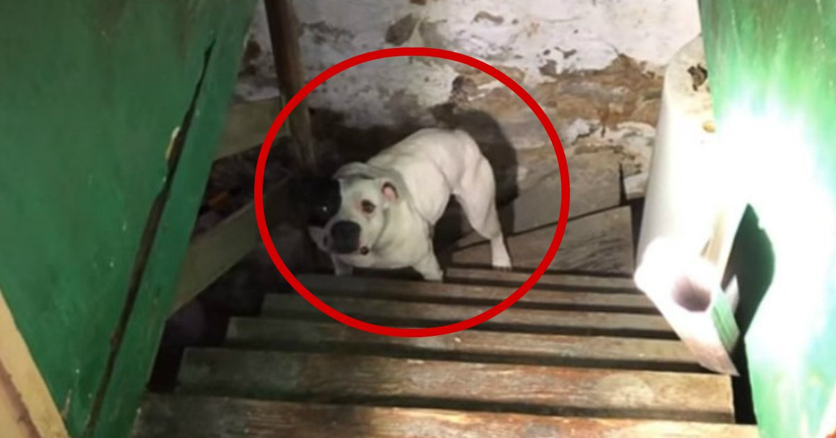 abandoned dog - Man Moves Into A New Home And Sees Abandoned Dog In The Basement, Pup's Reaction Says It All
