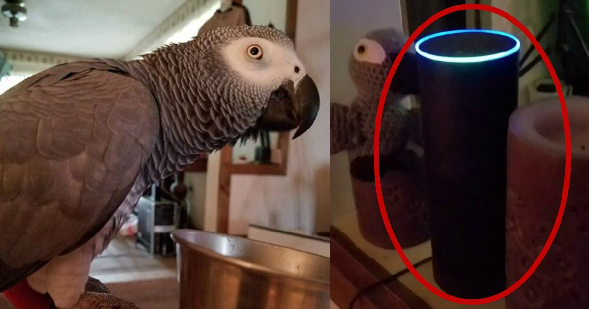 bibi.jpg?resize=1200,630 - Owner Found Out Her Parrot Made The Shopping List And Was Trying To Order Her Favorite Meals