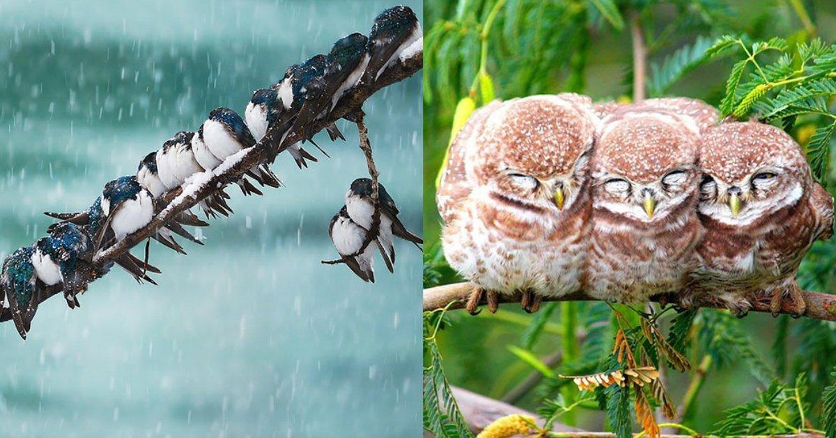 birdwarmth.jpg?resize=1200,630 - Ces photos d'oiseaux qui nichent ensemble pour se réchauffer vont vous réconforter!