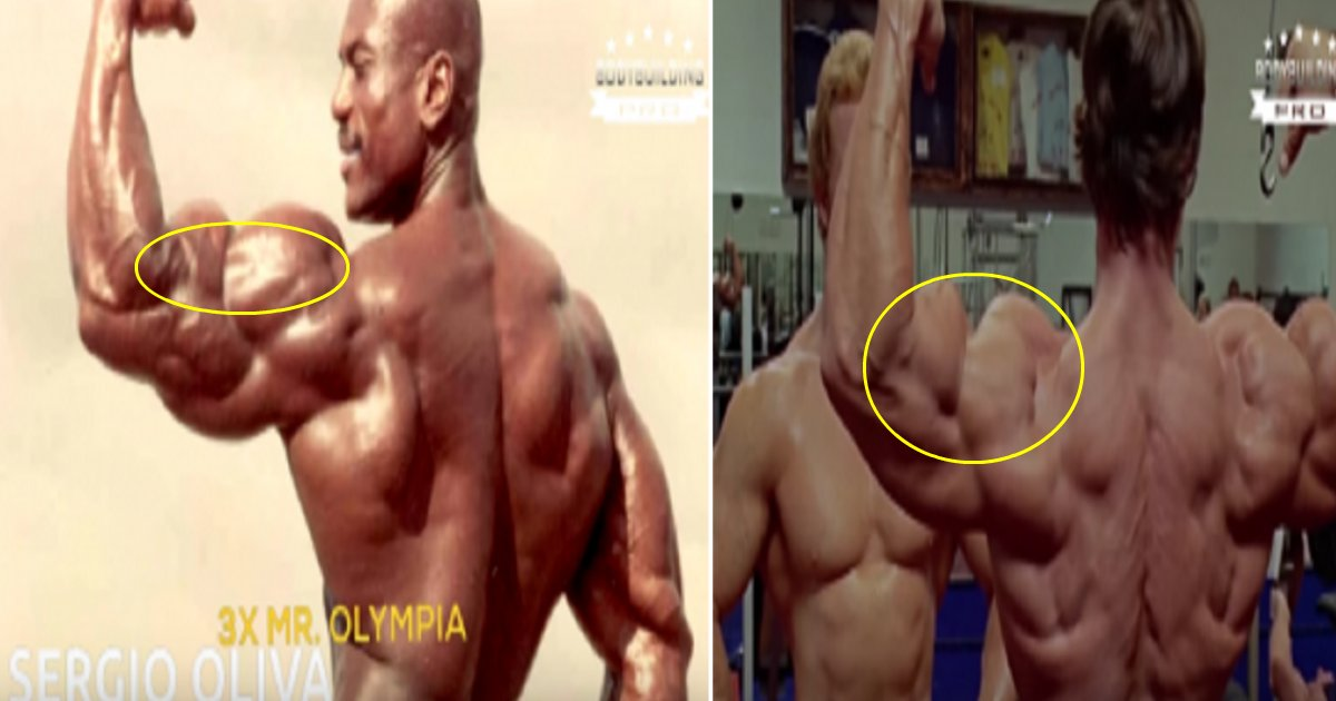 body building featured - 5 Pictures Of Mr. Olympia Winners Now And Then