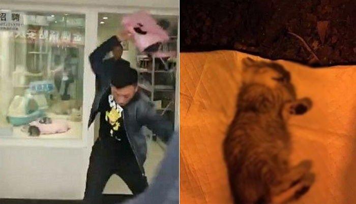 c3l5g79t814t8xas9y50.jpg?resize=1200,630 - ペットショップで買った子猫の「返品」が拒否され、床に数回投げ落とす男性