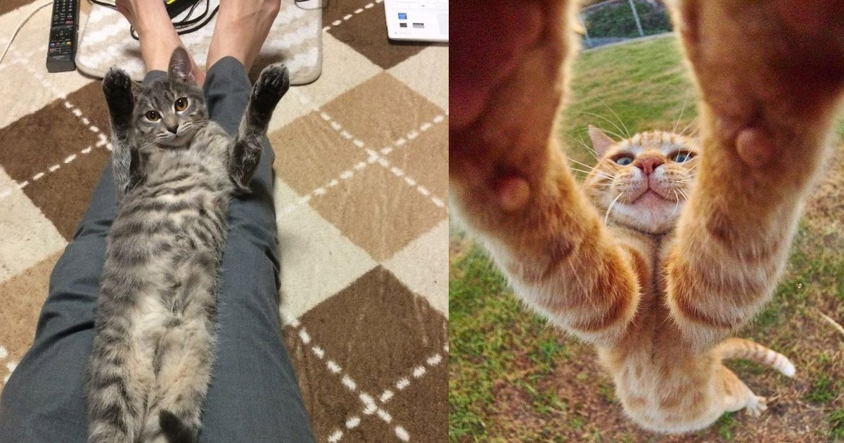cat 1.jpg?resize=300,169 - These Cats Are Ruling The Internet With Their Adorably Hilarious Stretching Pictures